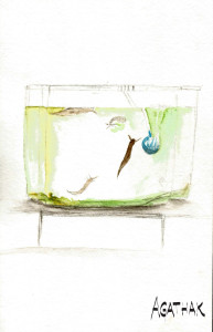 1007 aquarium