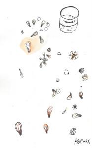 2007 larve de coraux