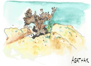 1708 corail